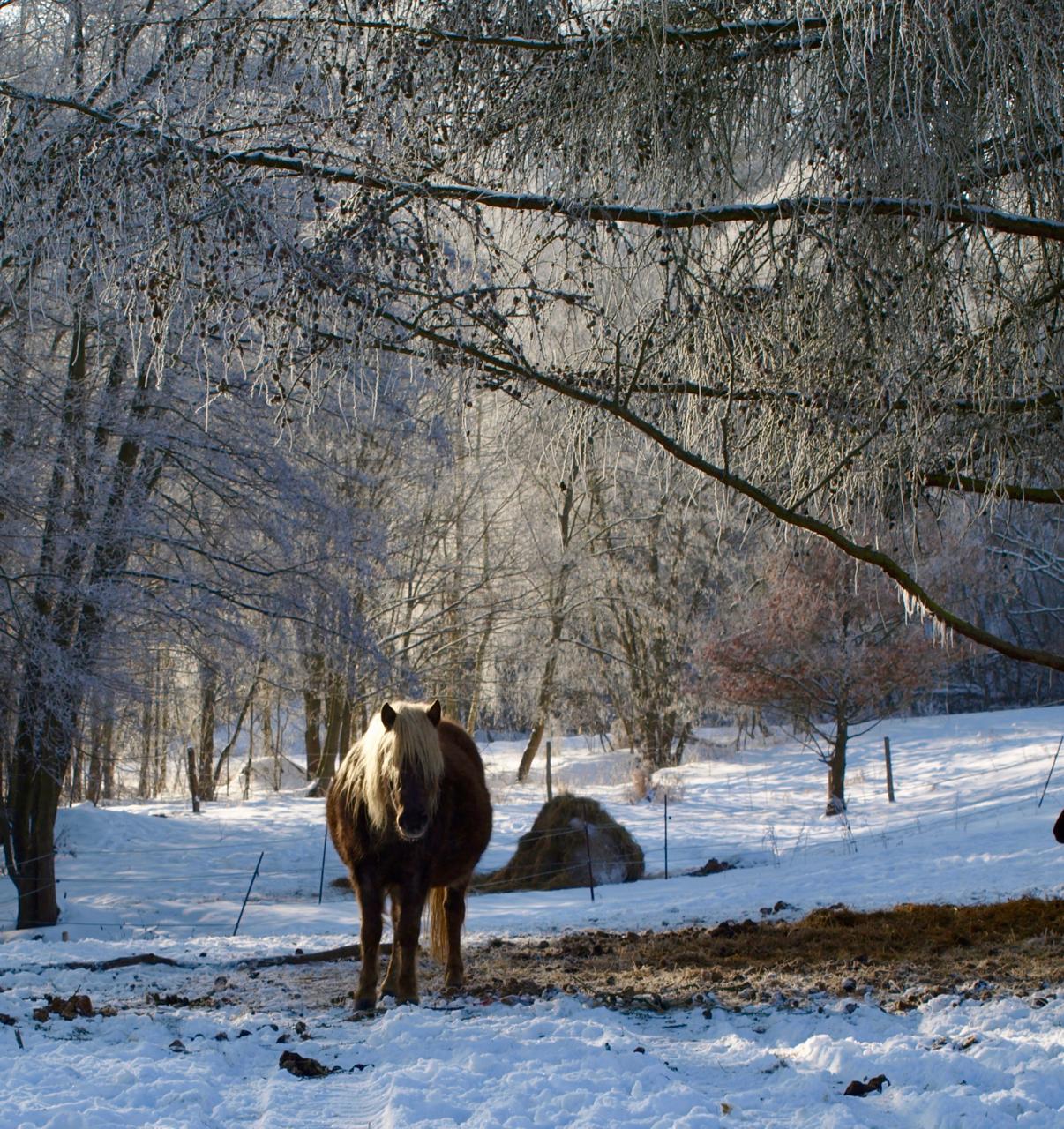 Rocky Mountain Pony