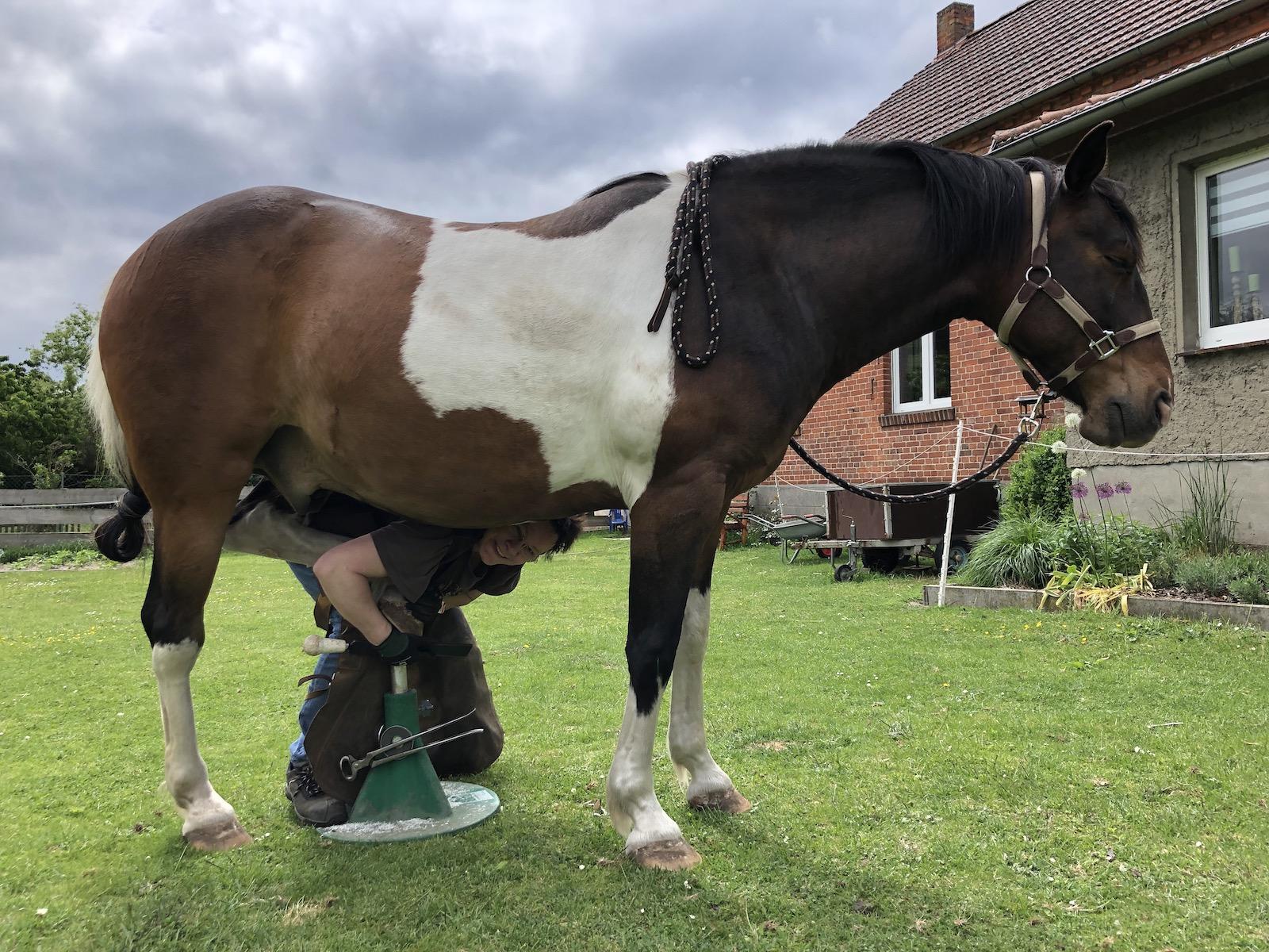 Hufpflege mit entspanntem Pferd und Hufpflegerin